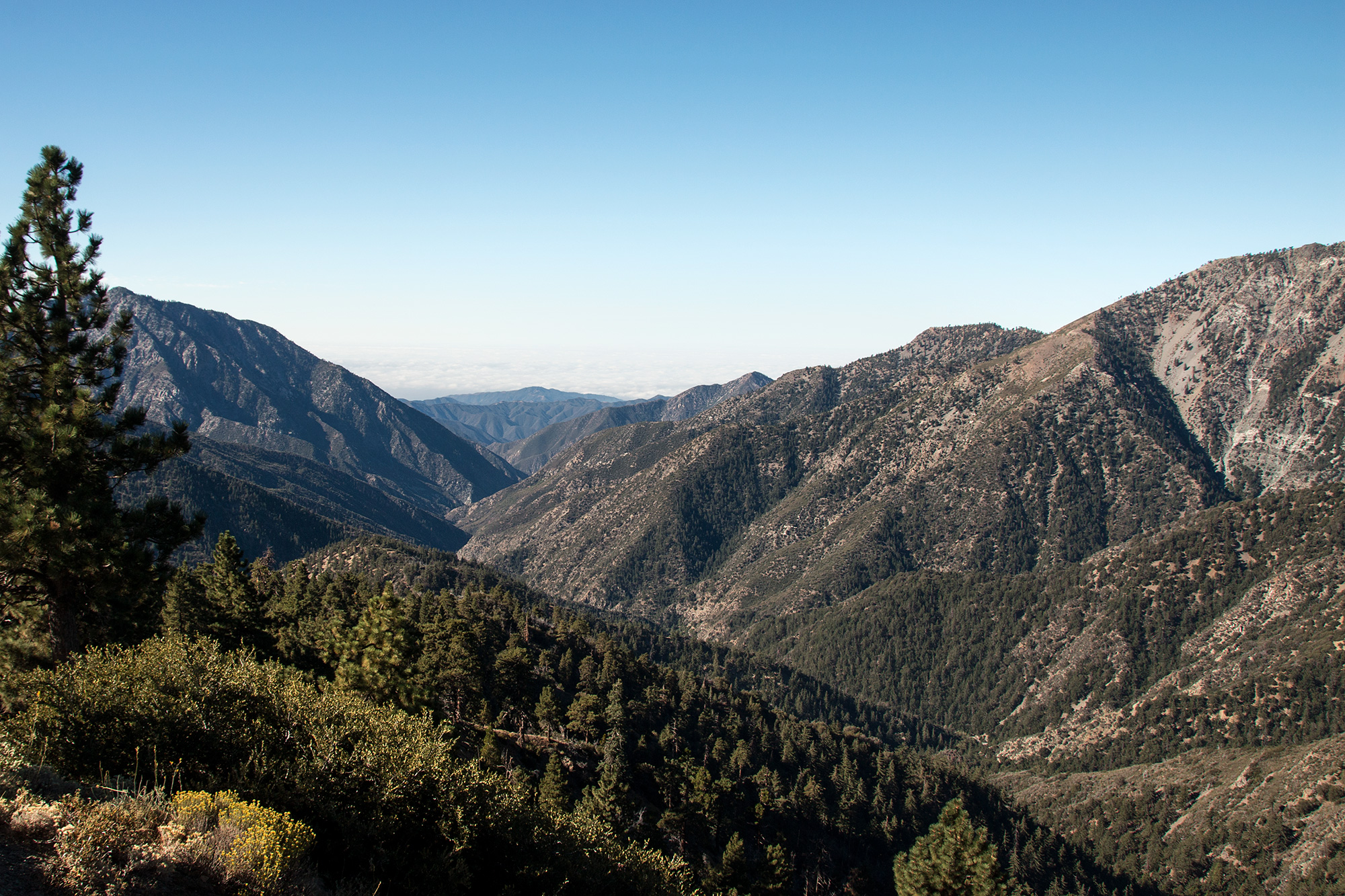 California Wandering 00069